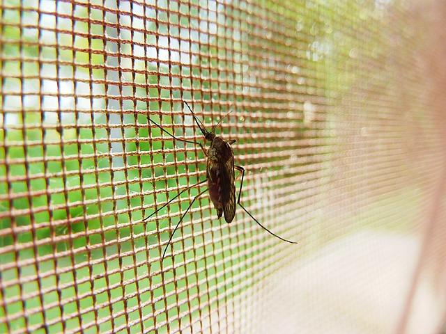 Mückenschutz durch Fliegengitter oder Mückennetz